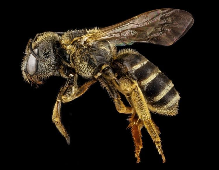 Can Bees and Wasp Sting When they are Dead