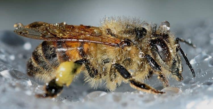 can bees breath underwater