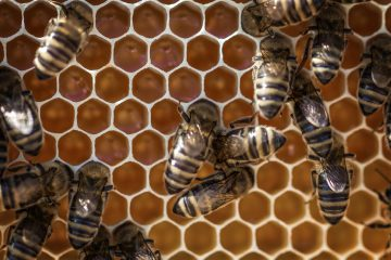 How do Bees Make Hexagons
