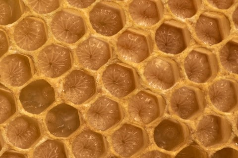 closeup-honeycomb
