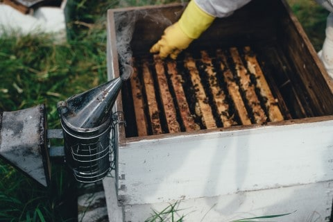 Hive Smoker