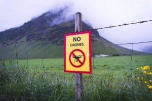 no drone bees