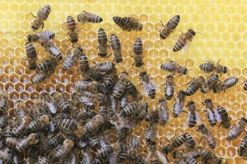 how-are-bee-hives-made