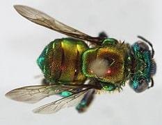 orange-bee