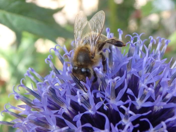how-to-identify-a-honeybee-wing