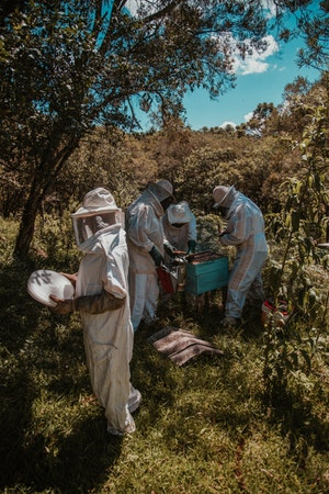 Beekeepers working on a hive box in their apiary.