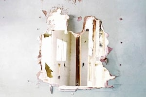 bee-damage-wall