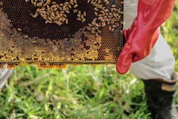 how-much-does-a-bee-hive-weigh