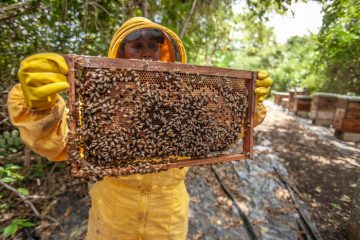 worlds-largest-beehives