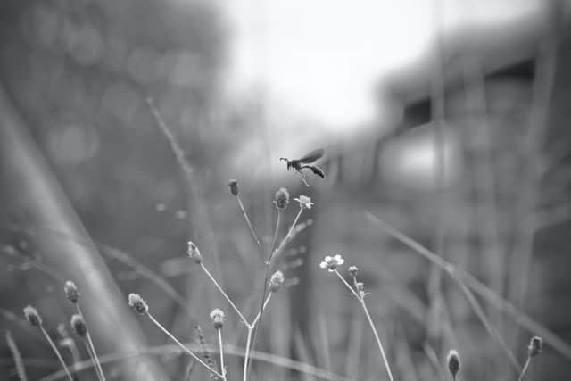 black wasp flying
